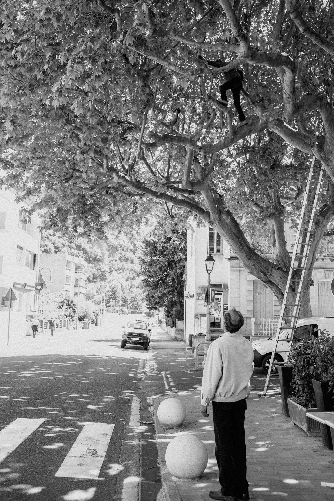 man in the tree 35mm summicron