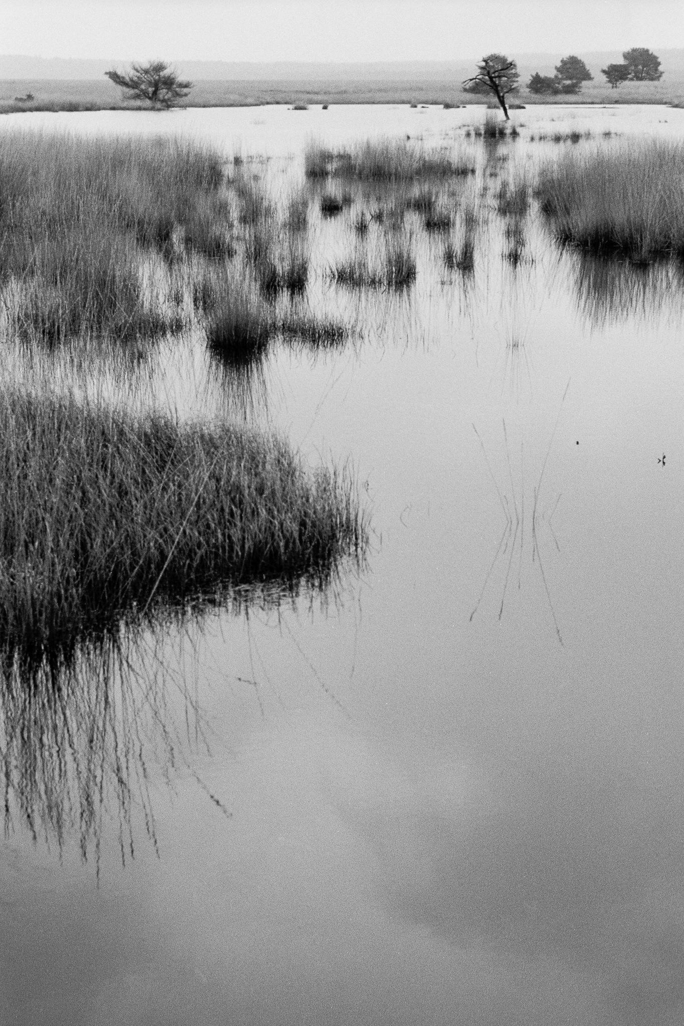Hoge Veluwe Nationaal Park Nederland