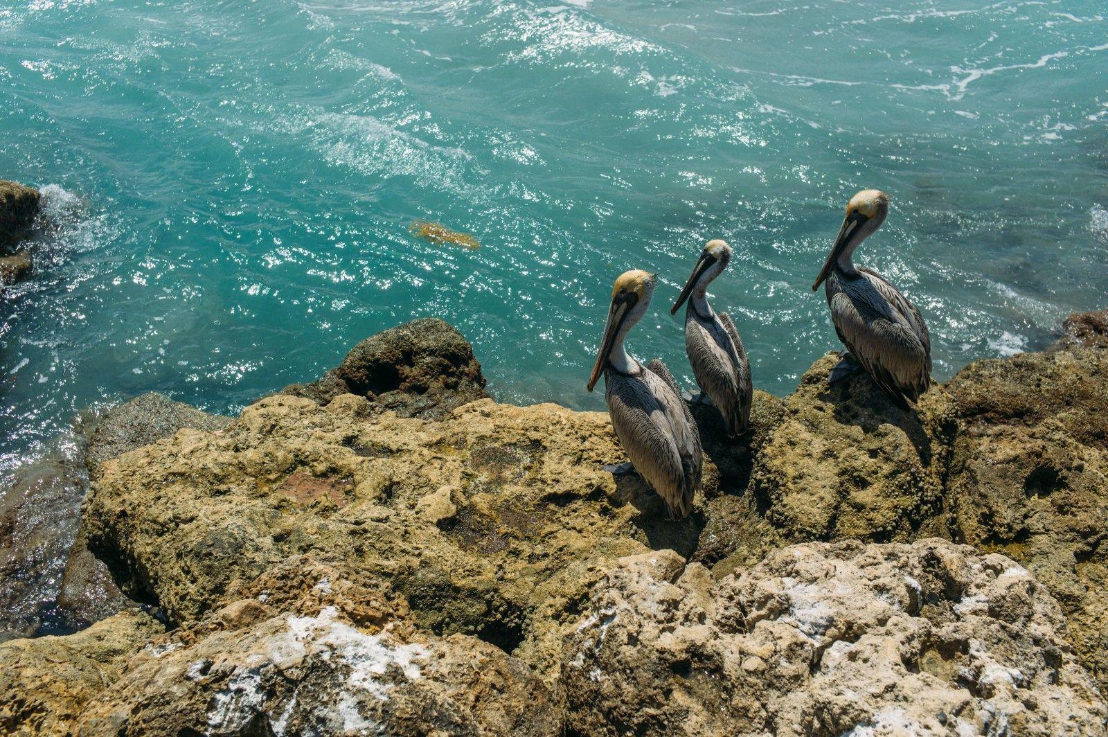 pelican_florida_usa_leica_m9p_35mm_summicron_jipvankuijk
