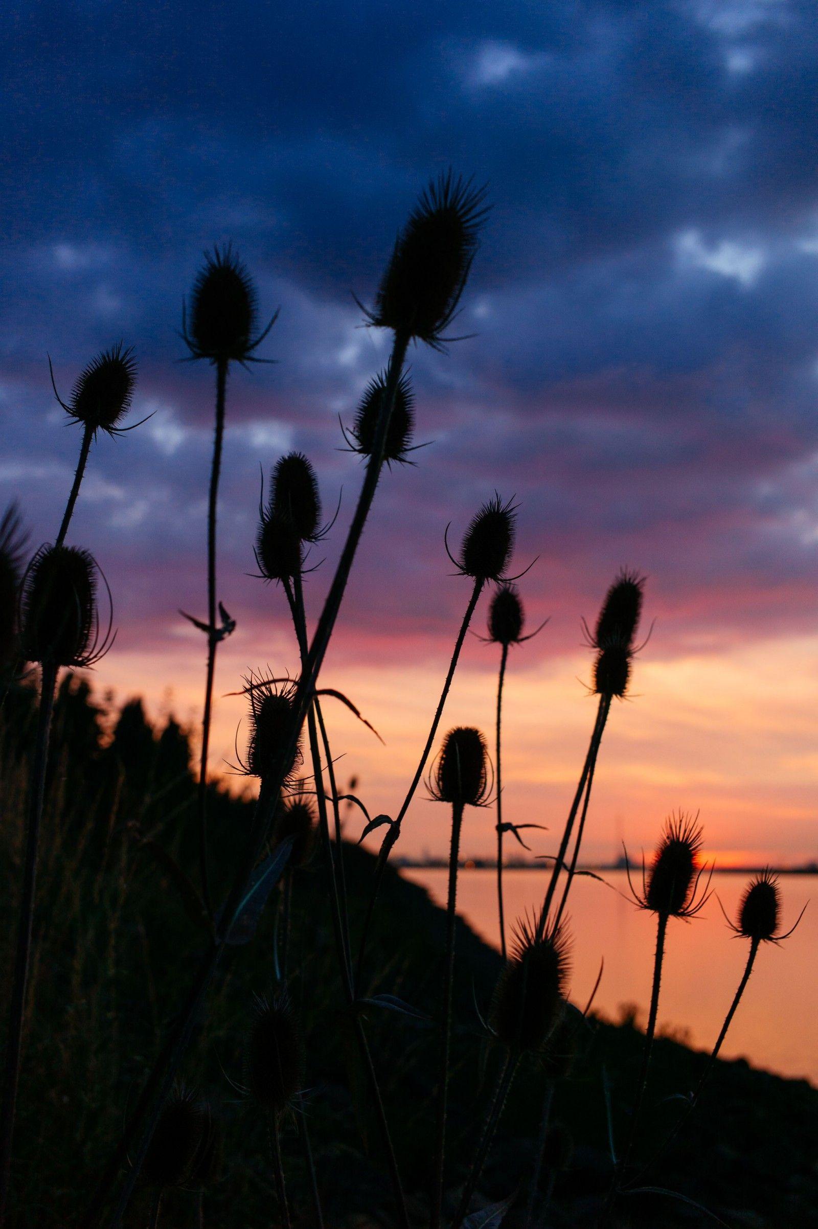 sunset_antwerp_belgium_leica_m9p_summicron_35mm_asph_jipvankuijk