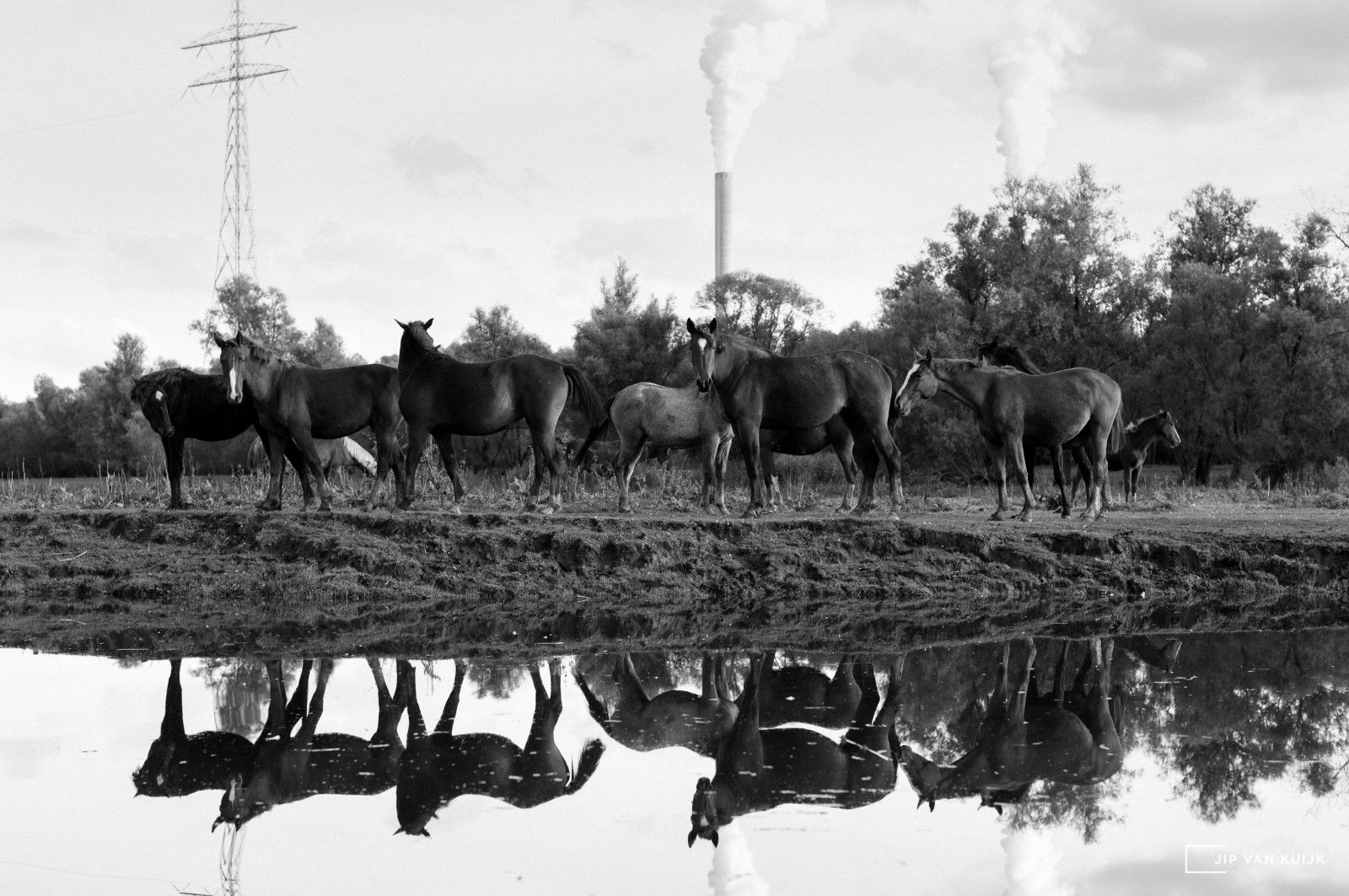 netherlands_biesbosch_horses_leica_s_medium_format_70mm_summarit_jipvankuijk_copyright
